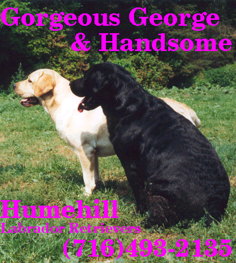 George & Handsome